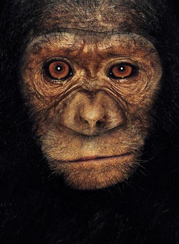 James & Other Apes | James Mollison