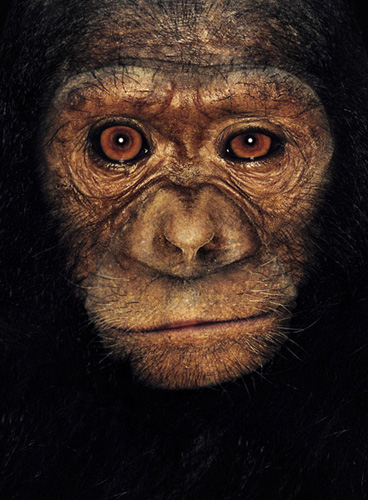James & Other Apes | James Mollison