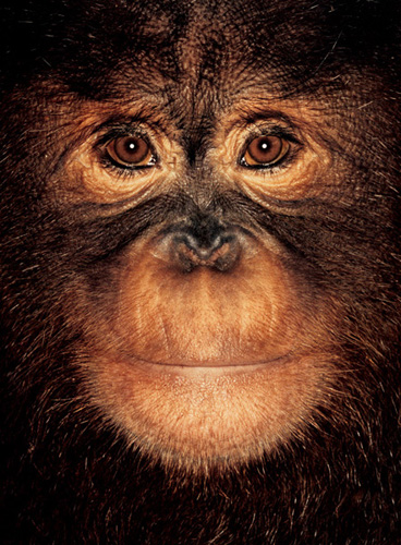 Millie | James & Other Apes | James Mollison