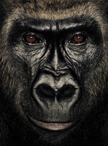 Pumbu  | James &Other Apes | James Mollison