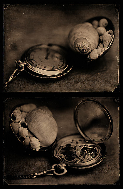 Snails of time (Diptych) | Ambrosoul