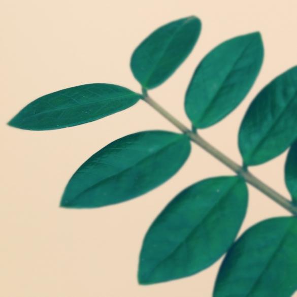 Série Verde | Alexandre Belém