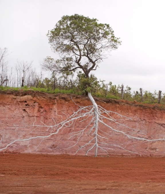 Natureza das Coisas #2 | Pedro Motta